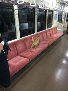 Traveling along seats