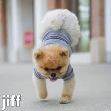 Jiffy is soooo cute