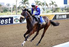 Summerhill Race Results: Greyville Polytrack 20/02/15 Race 2: MR 74 HANDICAP Open 1400m  Winner: BUFFALO BILL  Stronghold x West Coast Way  Bred By: Mr R Plersch   Owner: Mr B D Burnard.  Trainer: G H Van Zyl  Jockey: Warren Kennedy   Gold Circle Photo  www.summerhill.co.za  #Thoroughbred #HorseRacing