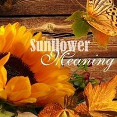 A wonderful page that shares fun facts, gifts and beautiful stories about sunflowers - Sunflower Meaning is a page devoted to the bold and beautiful Sunflower Plant which appears to worship the sun by always facing it as it moves.