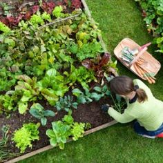 Bonnie Plants is a leading provider of plants for your vegetable garden or herb garden. Expert gardening tips help you with your plants. Benefits Of Gardening, Organic Gardening, Organic Farming, Grow Organic, Urban Gardening, Organic Baby, Organic Vegetables, Growing Vegetables, Healthy Vegetables