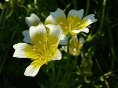 beautiful plants   Beautiful flowers pictures « Flower Loving   Flowers, Flower Picture ...