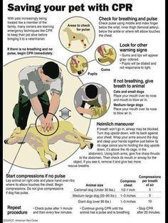 Pet CPR. Ask me if I care if you're making fun of me for pinning this.