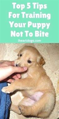 Educator E Collar Remote Dog Training Collar Dog Training To