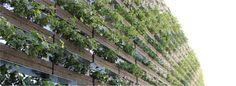 採光を重視したルーバー型壁面緑化 greenbiz Louver