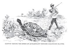 Darwin testing the speed of an elephant tortoise, Galapagos Islands