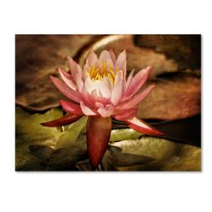Magic Lily by Lois Bryan Photographic Print on Canvas