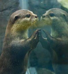 otter- mirror
