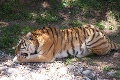 11. Louisville Zoo