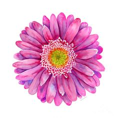 Pink Gerbera Daisy Painting