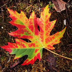 It's a beautiful first day of #fall today! The next few weeks will bring changing #colours to #Barrie & Area, the perfect time for a #scenic #drive. Visit tourismbarrie.com for ideas on things to do in our #fallcolours. #getoutandplay #VisitBarrie #falldrive #leaves #leaf
