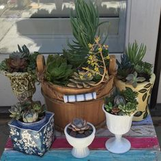 More Mother's Day goodies! #salvageandsucculents #succulentlife #succulover #succulentplants #succulentaddict #succulent #succulents #succulover #succulentgarden #recycled #repurposed #upcycle #upcycled #waterwisegardening #waterwise #droughttolerant #droughttolerantplants #droughttolerantgardening #artisan #crafty #diy #homedecor #homeandgarden #gardening  #mygarden #succulenthoarder #succylove #succulentcontainer #succulentcollection #succulentcity #containergarden by salvageandsucculents…
