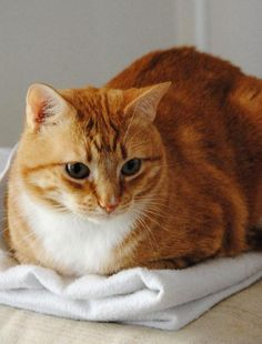 """* * GINGER RANDOM THOUGHT:  """"Der be nuthin' wrong wif us dat reincarnation can'ts cure."""""""