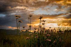 Photo Wildflower Sunset