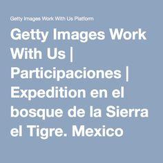 Getty Images Work With Us | Participaciones | Expedition en el bosque de la Sierra el Tigre. Mexico