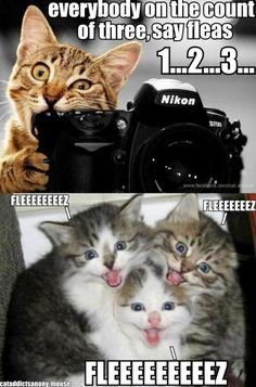 Humor kittens, funny kittens, hilarious cat memes …For more humorous quotes and funny pictures visit www.bestfunnyjokes4u.com