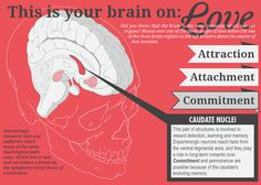 This Is Your Brain On Love - Elearning Examples