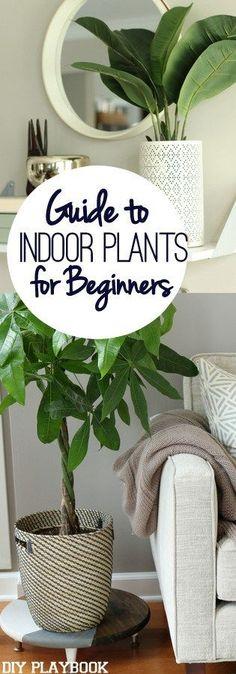 Plantas de Interior para Principiantes
