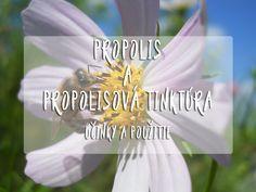 Obsah článkuČo to je propolis?Propolis účinkyPropolisová tinktúraPropolisová tinktúra dávkovanieMoje skúsenosti Med pozná určite každý znás avšak veľmi často zabúdame na ďalšie prospešné včelie produkty. Medzi najznámejšie patria včelí propolis, včelí peľ a včelia materská kašička. Vtomto článku vám priblížim propolis. Čo to je propolis? Ako som už spomínal, propolis je lepkavá živicová hmota hnedej až …