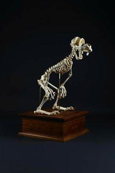 Incredible Cartoon Skeleton Art by Hyungkoo Lee - The Wondrous Classic Cartoon Characters, Favorite Cartoon Character, Classic Cartoons, Disney Characters, Incredible Cartoon, Skeleton Art, Skeleton Model, Famous Cartoons, Wow Art
