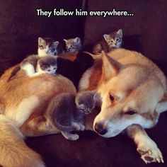 Kittens following him everywhere! Cats and Dogs... Cute and Adorable!!