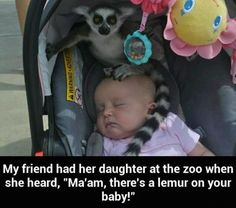 @ralatantis I feel like this would have been our experience if we would have gone to the zoo lol