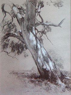 Dappled Light by John McCartin Charcoal ~ 30cm x 41cm