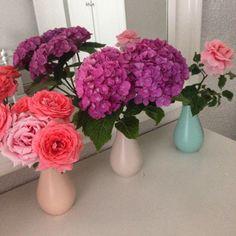 Bahçemizin Çiçekleri