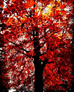 Photograph - Tree Of Flames by Mimulux patricia No , Framed Wall Art, Wall Art Prints, Flame Art, Autumn Trees, My Favorite Color, Illustration, Sunset, Abstract, Photography