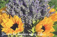 """You are the Sunshine of my Life"" , taken at our farm"