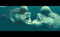 Oceans le film-documentaire de Jacques Perrin
