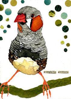 Zebra Finch   Art Card   ACEO   Watercolor   Carol Kroll Art 2013