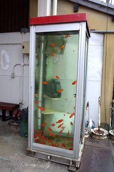 """「金魚の電話ボックス」って知ってますか?電話ボックスが水槽になっていてそこに金魚が泳いでいるんです!この電話ボックスは金魚の養殖が盛んな""""金魚の町""""と呼ばれる奈良県大和郡山(やまとこおりやま)市にあるんです。これは実際に見に行ってみるっきゃない!!!"""