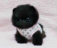 Animals and Pets Cute Teacup Puppies, Tiny Puppies, Cute Dogs And Puppies, Doggies, Corgi Puppies, Cute Little Animals, Cute Funny Animals, Little Dogs, Baby Animals Pictures