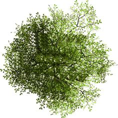 Tree Plan Png, Plan Tree, Landscape Architecture, Landscape Design, Factor Trees, Tree Psd, Trees Top View, Tree Photoshop, Photoshop Rendering