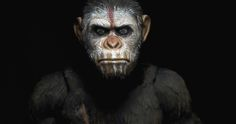 Dawn of the Planet of the Apes: NECA Teases It's Upcoming Toy Line -- The toy company previews its Caesar action figure, announcing that new merchandise from all previous films will be available this June. -- http://wtch.it/VHCIy