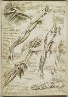 Anatomy sketches by Leonardo da Vinci. Leonardo used multiple sources to amalgamate his sketches. He would use bodies at different stages of dissection or decomposition and then combine them into a single sketch to show the various structures at once. Anatomy Study, Anatomy Drawing, Anatomy Art, Anatomy Reference, Human Anatomy, Drawing Reference, Anatomy Sketches, Foot Anatomy, Life Drawing