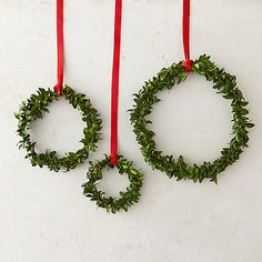 Fresh Boxwood Circlet Trio I could make these, too