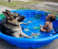 Aaawwwww it's a German Shepherd with a baby in a pool. He's calming him down. #germanshepherd