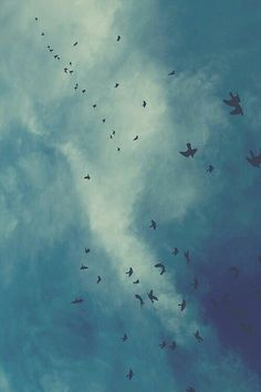 sleep through summer Freedom Bird, Sky Aesthetic, Car Wallpapers, Mother Nature, Cover Art, Most Beautiful Pictures, Serenity, Wattpad, Birds
