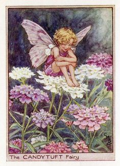"""Candytuft Flower Fairy Cicely Mary Barker, Illustrator from her book, """"Flower Fairies of the Summer"""", 1925 Cicely Mary Barker, Flower Fairies, Fantasy Kunst, Fantasy Art, Fairy Dust, Fairy Tales, Fairy Land, Illustrator, Fairy Pictures"""