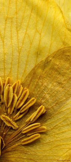 denim-and-chocolate:  #mellow yellow