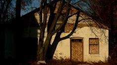 ловлю тінь дерева на стіні покинутої колгоспної пекарні