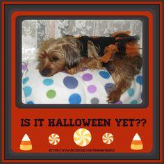 Dog Meme, Halloween, https://www.facebook.com/FenwayFamily