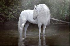 PRE stallion Expres Pyramid as unicorn, photo Emmy Eriksson