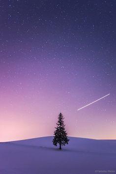 サンタが街に飛んでった♪  もうすぐクリスマス(^^) 皆様の所にはサンタさん、やってくるといいですね♪  北海道上川郡美瑛町「クリスマスツリーの木」