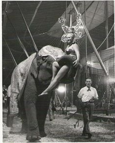 Daddy and Vickie on Chris one of the original 5 Cristiani Elephants. Old Circus, Big Top Circus, Circus Train, Circus Acts, Circus Clown, Vintage Circus, Circus Pictures, Sideshow Freaks, Human Oddities