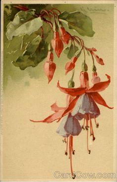 Catherine Klein - Fuchsia