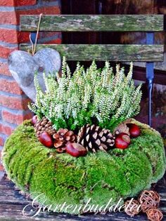 would be a super idea for spring flowers, chicks, and bunnies too.This says: Gartenbuddelei: Vor der Tür.This would be a super idea for spring flowers, chicks, and bunnies too.This says: Gartenbuddelei: Vor der Tür. Deco Floral, Arte Floral, Floral Design, Christmas Time, Christmas Wreaths, Christmas Decorations, Holiday Decor, Art Floral Noel, Moss Wreath