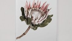 Pink Protea Floral Print, a stunning large floral photographic print that's perfect for your nursery or kid's room Protea Art, Protea Flower, Flowers, Floral Photography, Interior Design Services, Fine Art Paper, Nursery Decor, Floral Prints, Crown